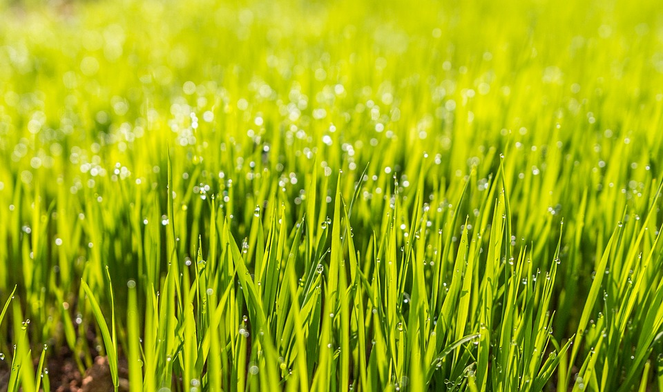 4 Things to Consider When Caring for a Lawn